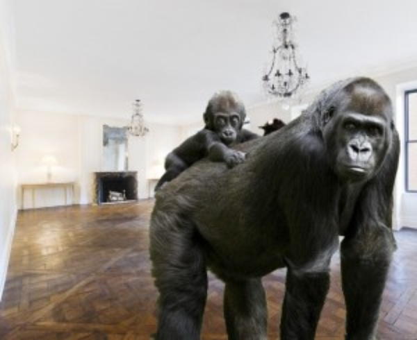 Learn about the primates of Park Avenue